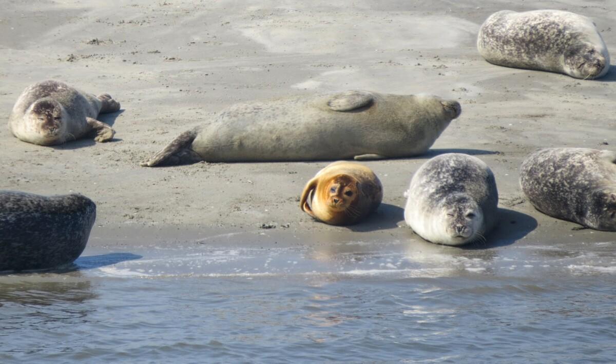 Nordsee: Tagesausflug nach Norddeich – Seehunde, Labyrinth und Strand