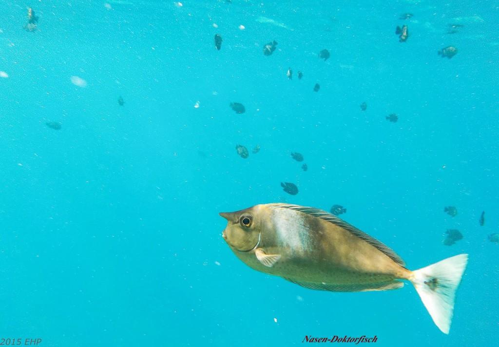 2015-Reise-008-Malediven-271-341