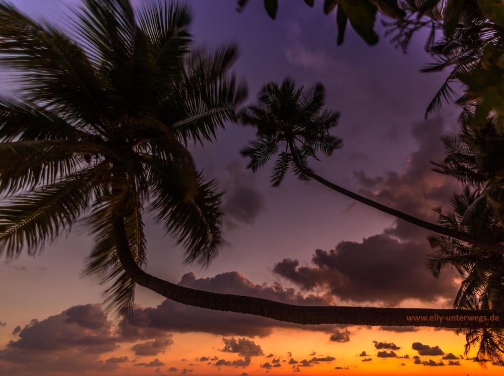 Malediven-Fihalhohi-Palmen-schraege-Palme-1