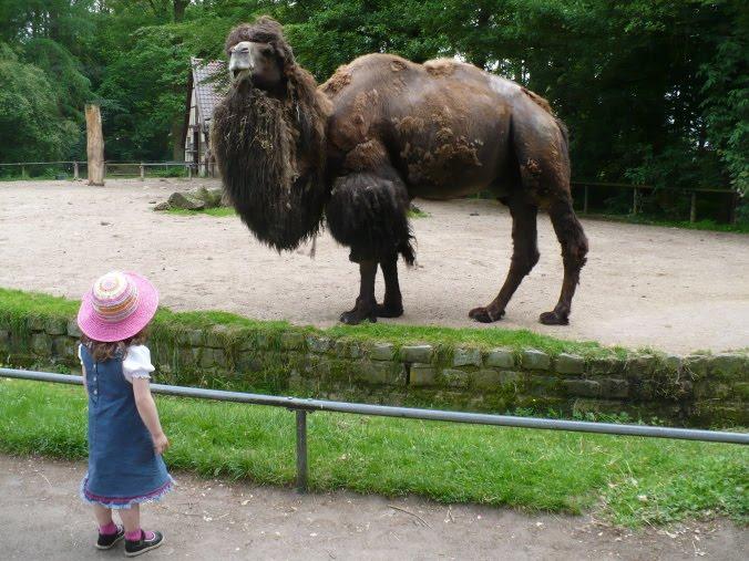 2010-06-06-zoo1