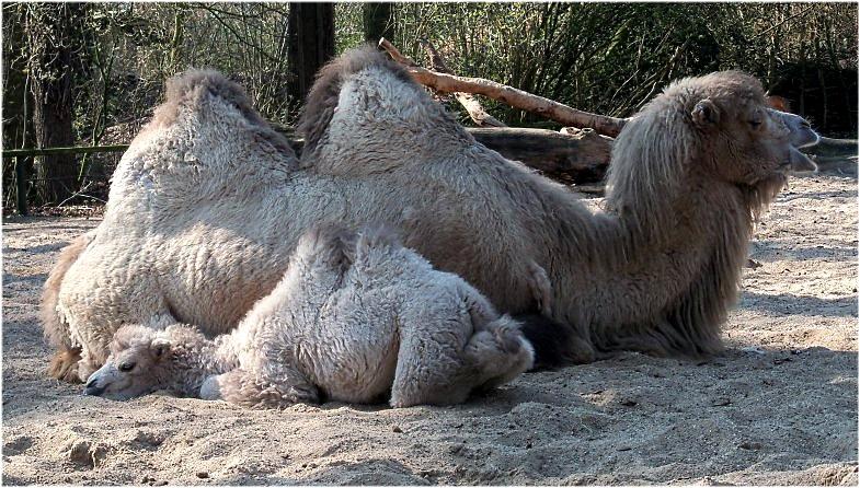 2011-03-29-zoo-16