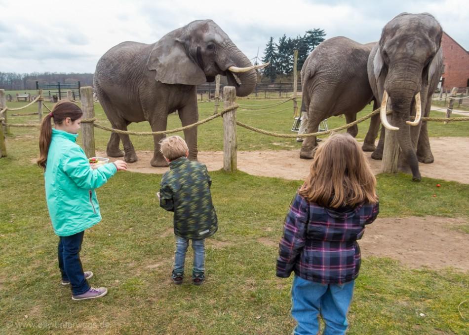 Der Elefantenhof Platschow
