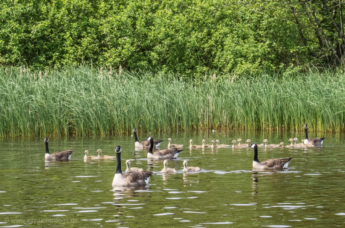 2016-05-Niederlande-Giethoorn-Tagesausflug-mit-Kinder (18)