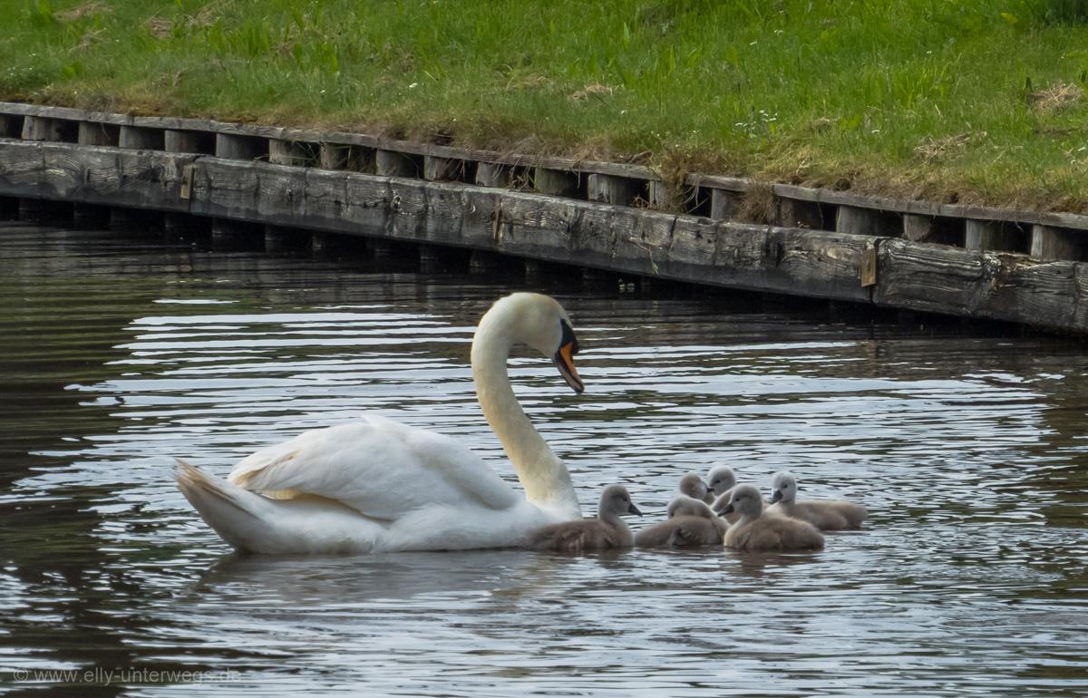2016-05-Niederlande-Giethoorn-Tagesausflug-mit-Kinder (53)