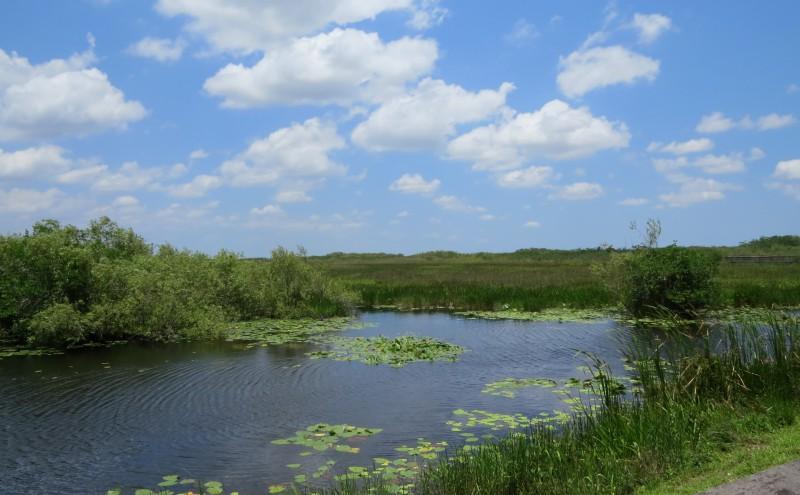 Die Everglades
