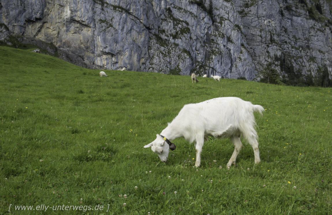 schweiz-heidiland-walensee-img_0663img_0663-3