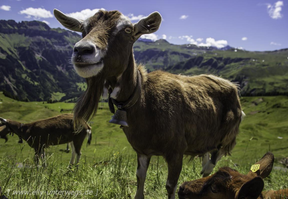 schweiz-heidiland-walensee-_mg_3846_mg_3846-3