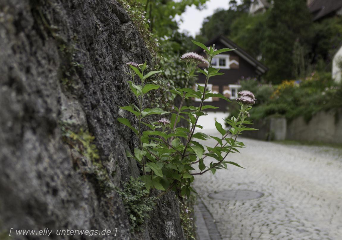 schweiz-heidiland-walensee-_mg_4135_mg_4135-3
