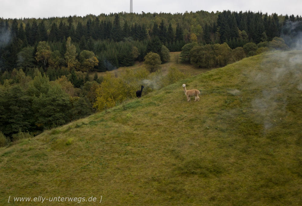 urlaub-erzgebirge-oberwiesenthal-seiffen-dresden-1-158