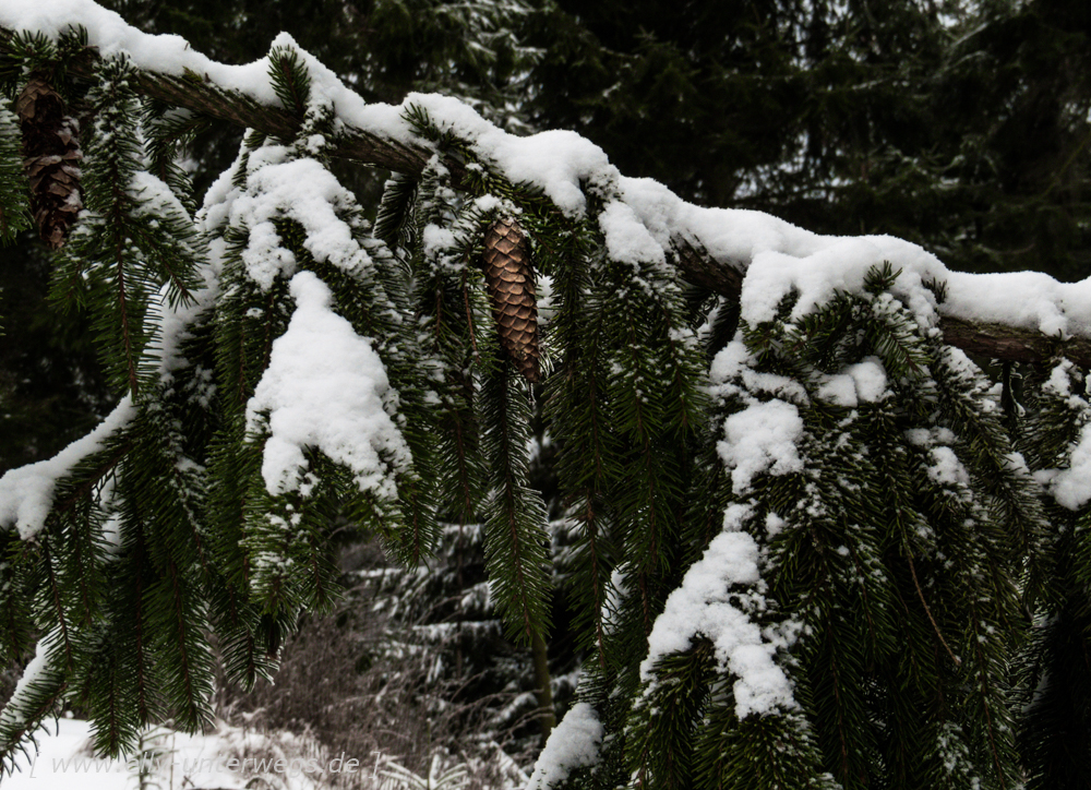 sauerland-winterberg-meschede-winterurlaub-sauerland-winterberg-meschede-winterurlaub-img_3870