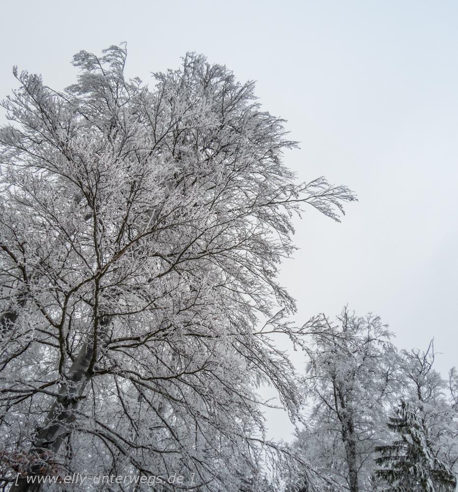 sauerland-winterberg-meschede-winterurlaub-sauerland-winterberg-meschede-winterurlaub-img_3884