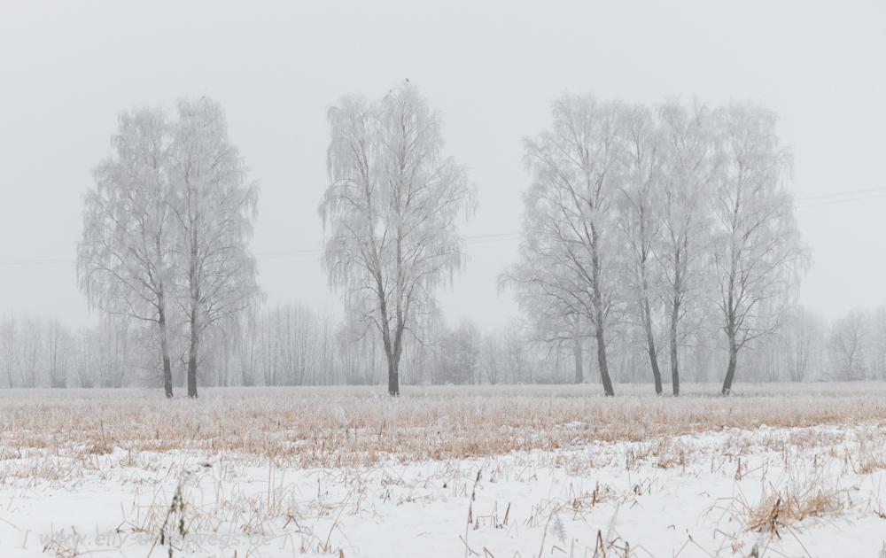 Winter-Muensterland (12 von 25)