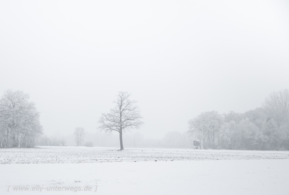 Winter-Muensterland (7 von 25)