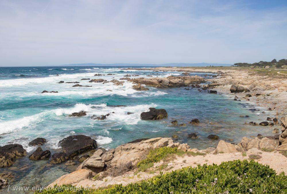 Monterey: Whale Watching und der 17-Mile-Scenic-Drive