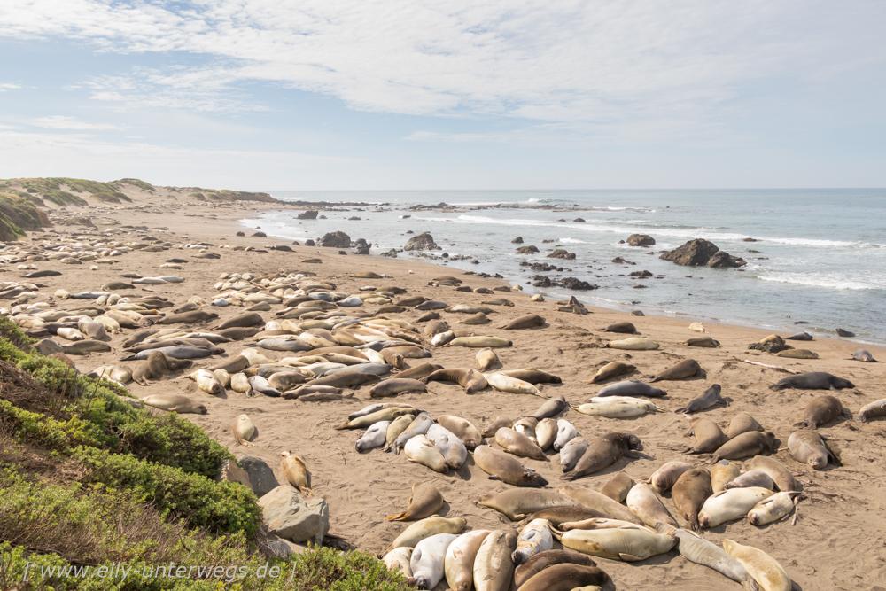 Pacific Highway No 1: Die See-Elefanten von San Simeon, der Ragged Point & Am Strand von Morro Bay