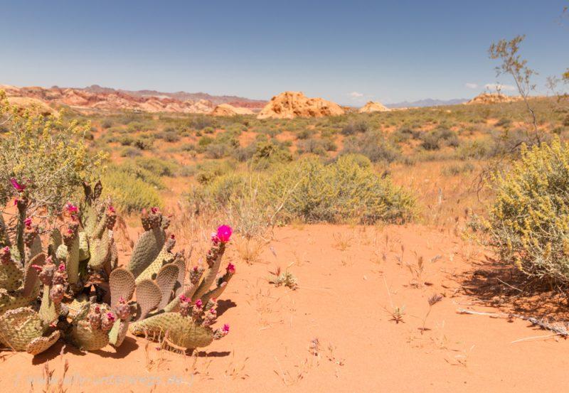 Das Valley of Fire in der Nähe von Las Vegas – oder: Der beste Abenteuerspielplatz der Welt!