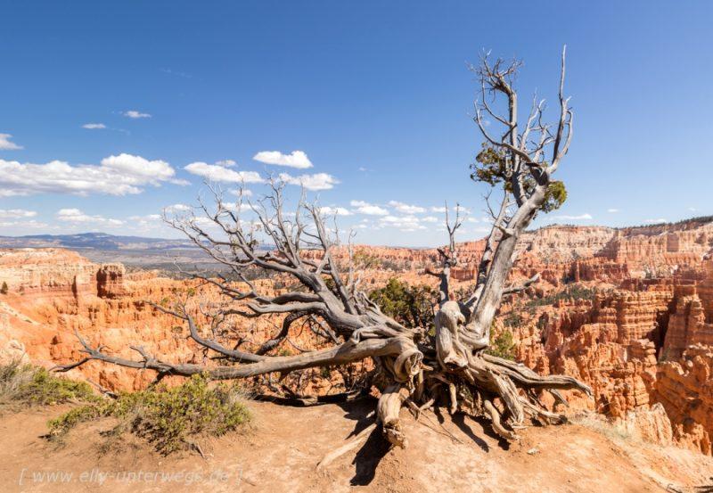 Der Bryce Canyon