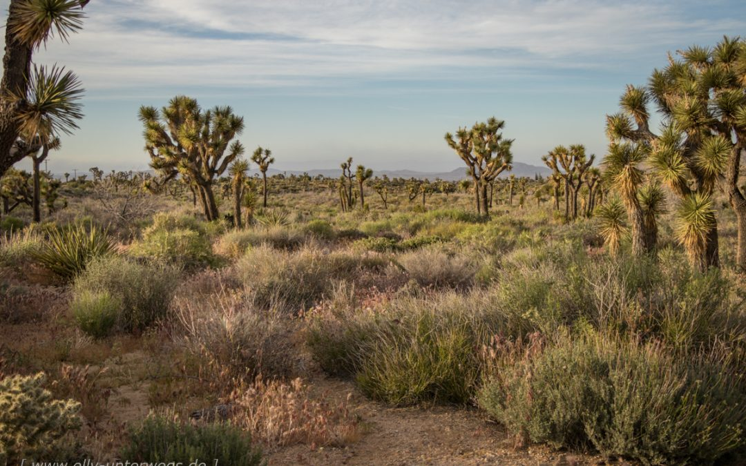 Der Joshua Tree Nationalpark