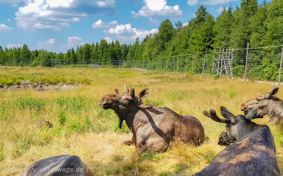 Hejdå Sverige- Tschüss Schweden Teil I: Fahrt nach Malmö mit Zwischenstop bei den Elchen